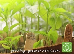 Episode 315: All About Seeds | Growing A Greener World | Annie Haven | Haven Brand | Scoop.it