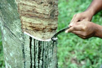 Rubber and seed opened to foreign investors