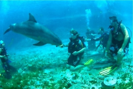 How Mary Conquered Her Fear of Water & Learned To Love Scuba!   Scuba Diving Adventures   Scoop.it