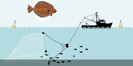 La science convoquée dans le conflit sur la pêche électrique