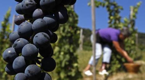 Ces curieux critères qui déterminent le classement des vins français et donc leur prix!   Le vin et ses innovations   Scoop.it