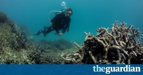 How to show 'the stench of death' on the Great Barrier Reef – Behind the Lines podcast | Marine Conservation Research | Scoop.it
