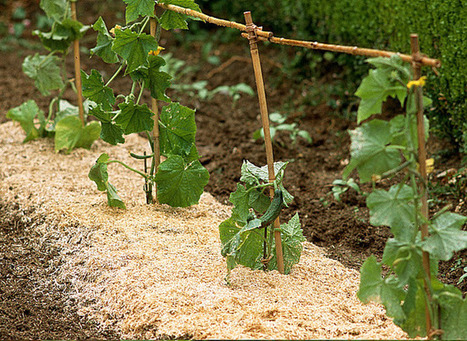 Couvrir le sol du jardin | jardins et développement durable | Scoop.it