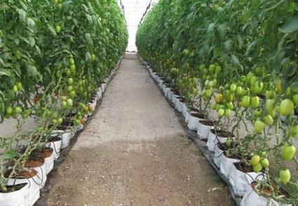 Invernaderos e hidroponía, el futuro de la producción en Michoacán | Horticultura Efectiva | Cultivos Hidropónicos | Scoop.it