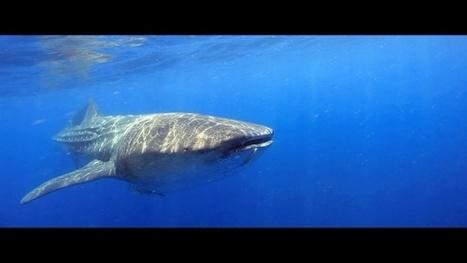 Vidéo Full HD | Mexique - Voyage de plongée en pays Maya ! | Plongeurs.TV | Scoop.it