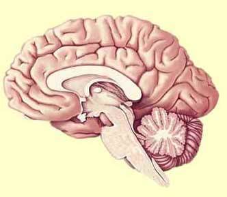 Does the brain 'remember' antidepressants? | Psychology and Brain News | Scoop.it