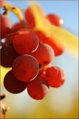 21/03/14 - Réchauffement climatique - Il va falloir s'adapter | Actualités du monde viticole | Scoop.it