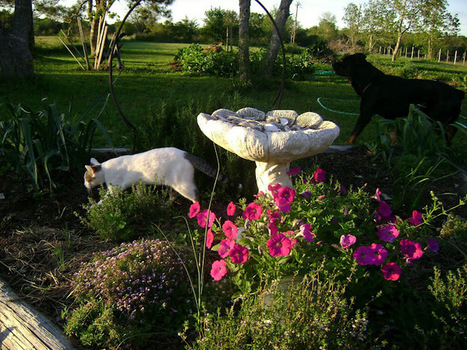 Thyme Square Gardens: Love And Respect For The Land: Moo Poo Tea In The Garden | Annie Haven | Haven Brand | Scoop.it