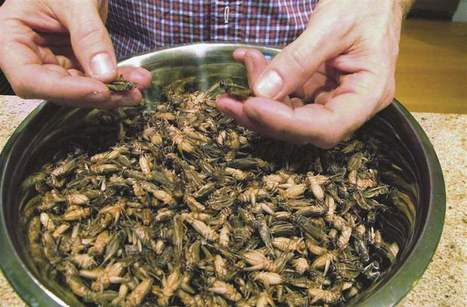 Fish and chirps? Some see bugs as the next big thing in food | Entomophagy: Edible Insects and the Future of Food | Scoop.it