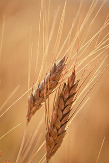 From frustration to foundation: Embracing a diagnosis of celiac ... | Gluten Freedom | Scoop.it