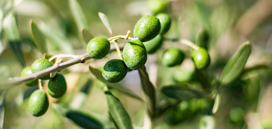 European production of olive oil stands at 2.25 million tons until April