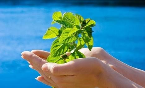 Démarche globale d'Eurest au ministère de l'Écologie - Zepros   Action Durable   Scoop.it