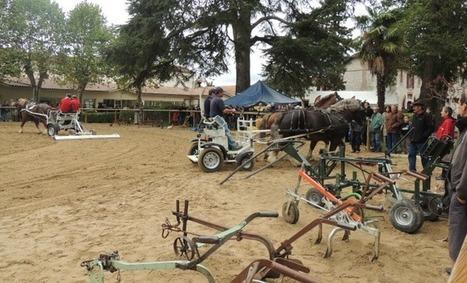 2ème salon de la traction animale à Villeneuve-sur-Lot (47) | Agriculture Aquitaine | Scoop.it