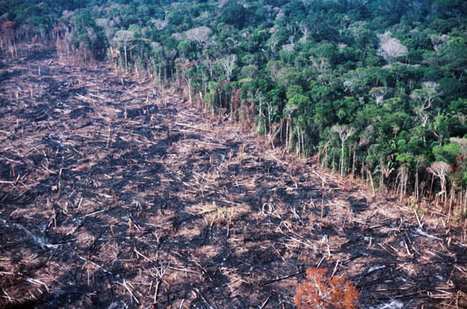 Global News Roundup: Amazon Deforestation on the Rise Again in Brazil | Geography for All! | Scoop.it