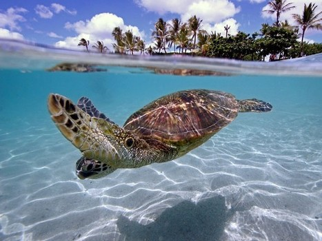 Underwater photography competition medal winners 2011/12 | Scuba Diving Adventures | Scoop.it