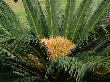 Plantas Vasculares | Botánica | Scoop.it