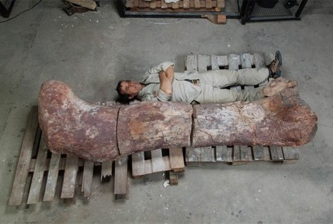 Monstrous Bones May Be That Of Largest Dinosaur That Ever Roamed The Earth | Skylarkers | Scoop.it