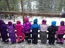 Norway preschool children sees reindeer slaughtered at farm | Animals R Us | Scoop.it