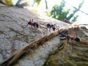 Rat and ant rescues 'don't show empathy' - University of Oxford | Empathy and Animals | Scoop.it