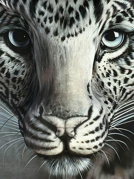 Amazing Body Art Illusions by Craig Tracy   Bored Panda   Xposed   Scoop.it