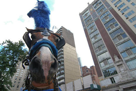 New film to delve into New York's carriage horse issue | Horses  around the world | Scoop.it