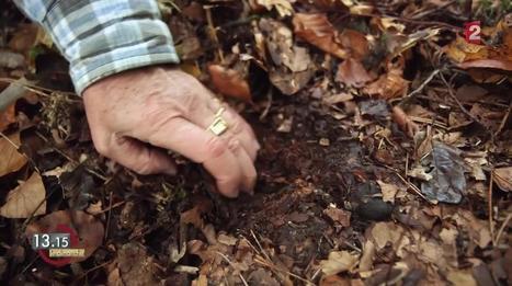 VIDEO. 13h15. Agriculture : moins on travaille la terre, plus elle est fertile | pour mon jardin | Scoop.it