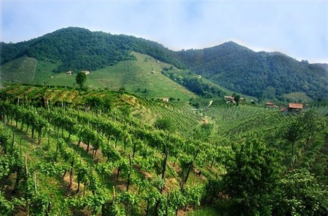 What makes a great vintage? - Decanter | Grande Passione | Scoop.it