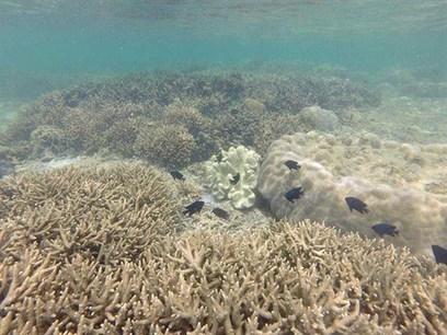 Vietnam : Écosystèmes marins en péril | Biodiversité & Relations Homme - Nature - Environnement : Un Scoop.it du Muséum de Toulouse | Scoop.it