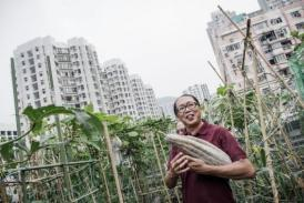 Rooftop farms flourish in space-starved Hong Kong | forest gardening | Scoop.it
