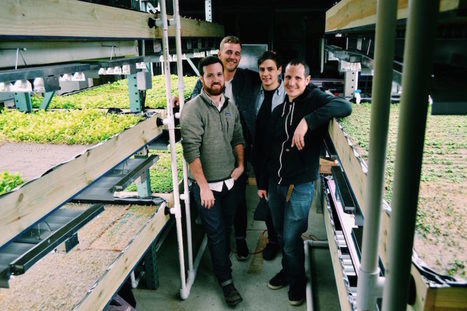 USA - Inside the Pfizer Building's Aquaponics Farm | Aquaponics in Action | Scoop.it