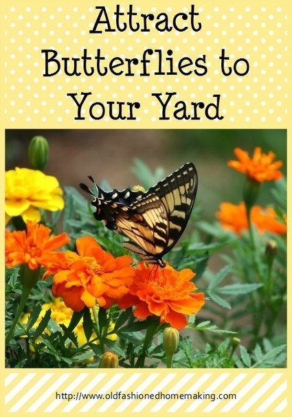 Attract Butterflies to Your Yard | Old Fashioned Homemaking | Homemaking | Scoop.it