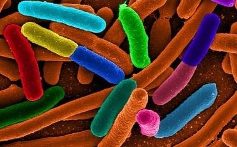 Affiora la prova forense che il superbatterio Escherichia Coli in ... | Forensic and hacking | Scoop.it