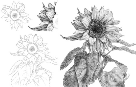 How to draw a sunflower drawing and painting tutorials scoop it
