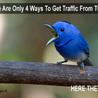 Online Paid Traffic