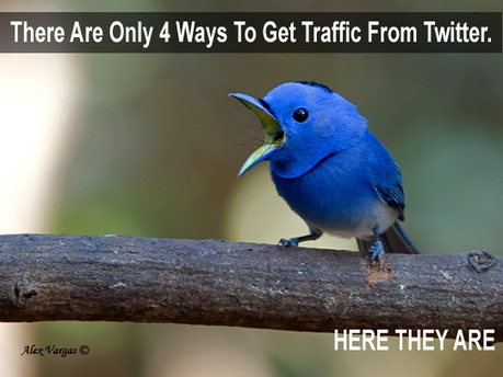There Are Only 4 Ways To Get Traffic From Twitter | Social Media Useful Info | Scoop.it