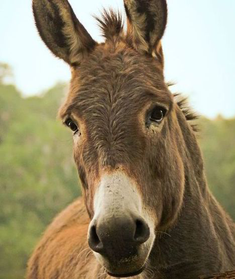 10 facts about donkeys | Politics | Scoop.it