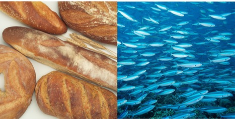The Power of Story -- Loaves and Fishes | Just Story It! Biz Storytelling | Scoop.it
