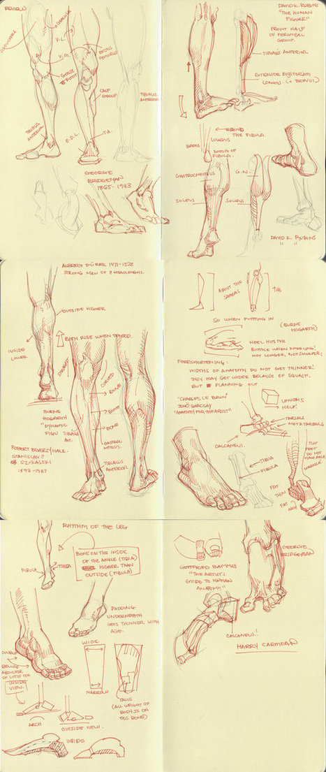 how to draw legs\' in Drawing References and Resources