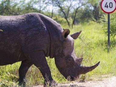 Rhino poachers arrested | World Regional Geography | Scoop.it