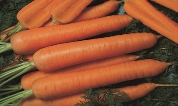 2016: The Year of the Carrot | Vegetable Gardening Resources | Scoop.it