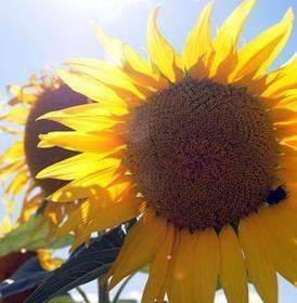 Grainothèque et jardin partagé : les idées poussent | (Culture)s (Urbaine)s | Scoop.it