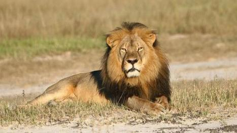 Cecil the Lion's 'Brother,' Jericho, Reported Dead in Zimbabwe | ProNews | Scoop.it