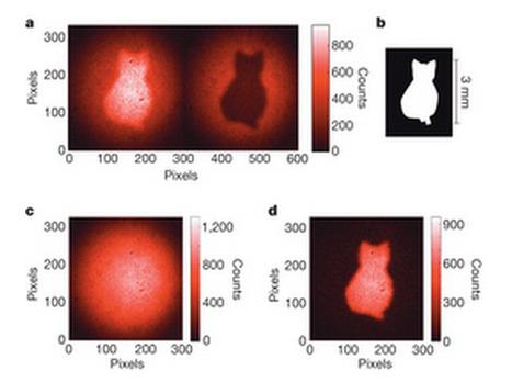 Schrödinger's cat caught on quantum film using quantum entanglement | Amazing Science | Scoop.it