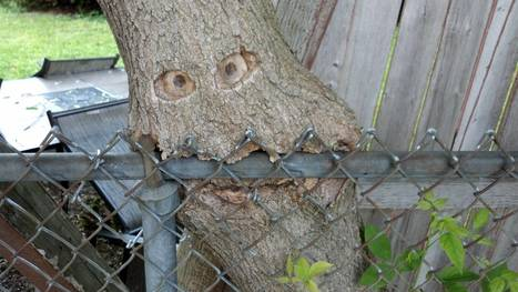 Fence-eating tree | Upcycled Garden Style | Scoop.it