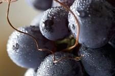 Quando l'uva diventa un massaggio - Vanity Fair.it | Wine in Tuscany | Scoop.it