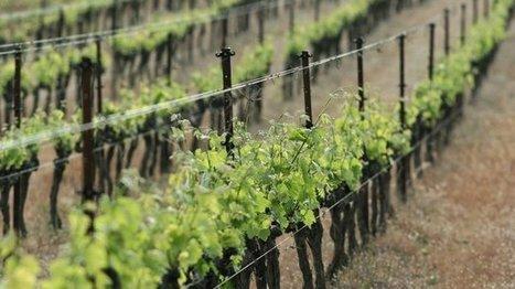 Un Fronton proclamé meilleur vin au monde - France 3 Midi-Pyrénées | Route des vins | Scoop.it