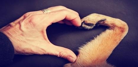 Descubre por qué el perro es el mejor amigo del hombre | Bichos en Clase | Scoop.it