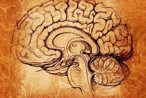 New Insight Into The Influence Of Brain Chemicals On Memory - Science News - redOrbit | Video Of The Day Influences | Scoop.it