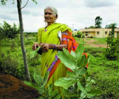 Creating medicinal forests a giant step to goodhealth | Nature's Bounty | Scoop.it
