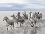 Wild Horses Picture - National Geographic | The Blog's Revue by OlivierSC | Scoop.it